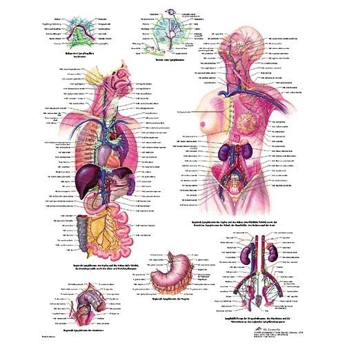 """... for """"Anatomie Des Menschen Innere Organe"""" – Calendar 2015"""